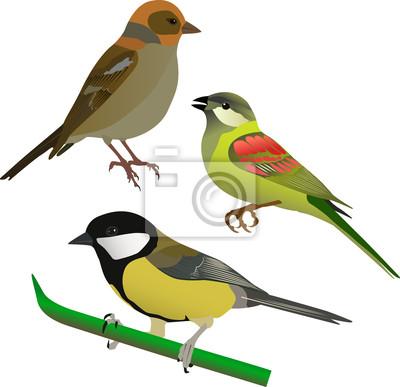 Bild 3 Vögel
