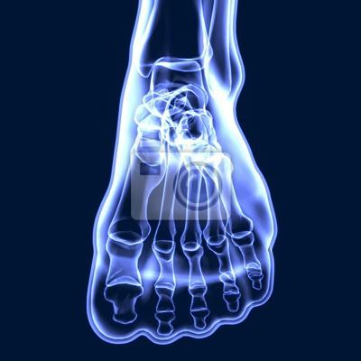 3d abbildung der menschlichen körper knochen gelenkschmerzen ...