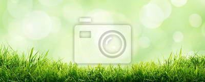 Bild A fresh spring sunny garden background of green grass and blurred foliage bokeh.