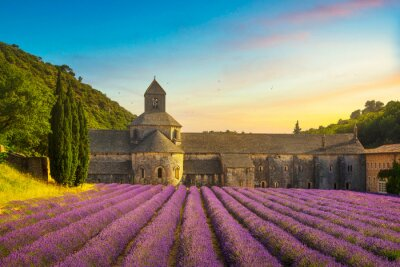Bild Abbey of Senanque blooming lavender flowers panoramic view. Gordes, Luberon, Provence, France.