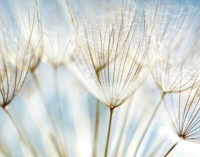 Bild Abstrakt Löwenzahn Flower Background