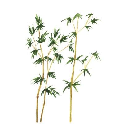 Bild Abstrakt wilde Bambus Bäume auf weißem Hintergrund.