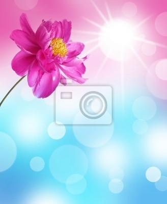 Bild abstrakten Hintergrund mit Pfingstrose Blume