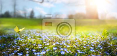 Bild abstrakter Natur Frühling Hintergrund; Frühlingsblume und Schmetterling