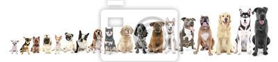 Bild Achtzehn sitzende Hunde in Zeile, von klein bis groß, isoliert auf weiß