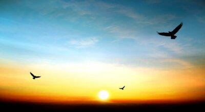 Bild Adler fliegen in den Himmel schöne Sonnenuntergang