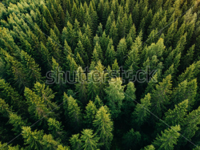 Bild Aerial top view of summer green trees in forest in rural Finland. Drone photography