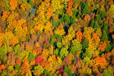 Bild Aerial view of fall foliage in Vermont.