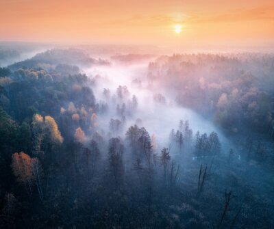 Aerial view of foggy forest and meadows at colorful sunrise in autumn. Beautiful landscape with trees in fog, river, fields and orange sky with sun in the morning. Fall colors. Top view. Nature