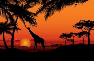 Bild Afrikanische Landschaft mit Tier-Giraffe Silhouette. Savanna Natur Sonnenuntergang Hintergrund