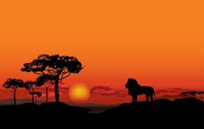 Bild Afrikanische Landschaft mit Tier Löwe Silhouette. Savanna Sonnenuntergang Hintergrund