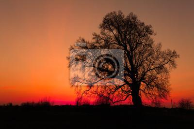 Bild Afrikanische Sonnenuntergang mit Baum