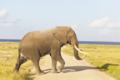 Bild Afrikanischer Elefant in Kenia