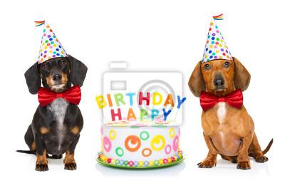 Alles Gute Zum Geburtstag Hund Leinwandbilder Bilder Platzhalter