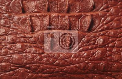 Bild Alligator gemusterten Hintergrund