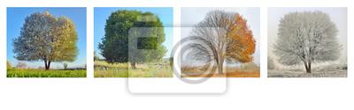 Bild alone tree in four season