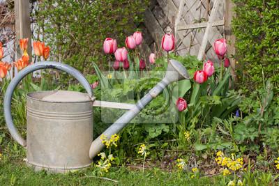 Alte Gießkanne Aus Zink Im Garten Mit Tulpen Und Schlüsselblumen