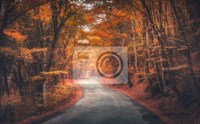 Amazing autumn forest with road in fog. Trees with red and orange foliage in fall. Dreamy landscape with foggy trees, mountain road, colorful leaves. Travel. Nature seasonal background. Magical forest
