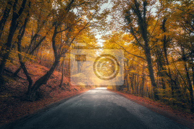 Amazing autumn forest with road in fog. Trees with red and yellow foliage in fall. Dreamy landscape with foggy trees, mountain road, colorful leaves. Travel. Nature seasonal background. Magical forest