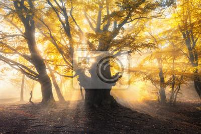 Amazing Herbst Wald im Nebel mit hellen Sonnenstrahlen bei Sonnenuntergang. Schöne Bäume mit gelben und orangen Blättern auf den Zweigen und rotem Laub. Bunte Landschaft mit nebligen Wald und goldenen