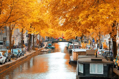 Bild Amsterdam.