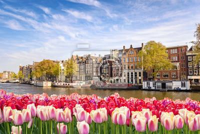 Bild Amsterdam-Stadtskyline an der Kanalufergegend mit Frühlingstulpenblume, Amsterdam, die Niederlande