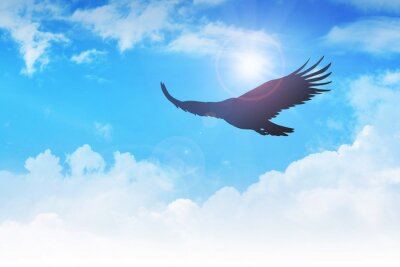 Bild An eagle flying in the air