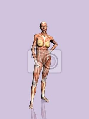 Anatomie der frau. leinwandbilder • bilder körperlich, pädagogisch ...