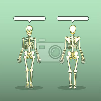 Anatomie des skeletts des menschlichen körpers leinwandbilder ...