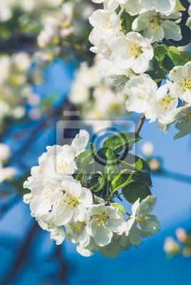 Apple Blumen Hintergrund