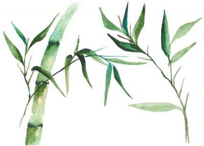 Bild Aquarell-Bambus-Illustration
