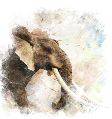 Bild Aquarell Bild Von Elephant