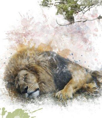 Bild Aquarell Bild Von Sleeping Lion