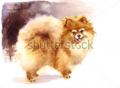 Bild Aquarell-Hundpomeranian-Porträt-handgemalte nette Tier-Haustier-Illustration