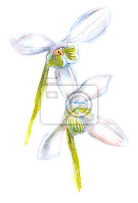 Aquarell-Illustration von zwei Blumen
