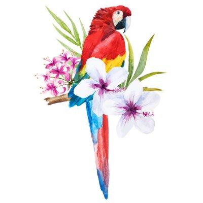 Bild Aquarell-Papageien