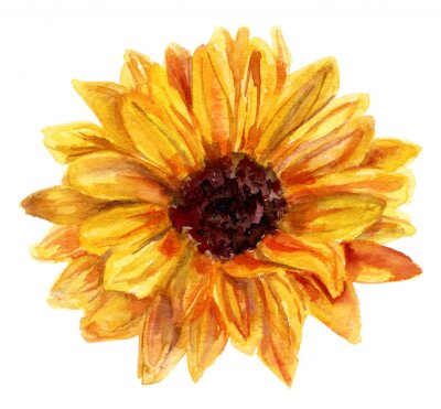 Bild Aquarell Sonnenblume Zeichnung auf weißem Hintergrund, Vintage-Stil