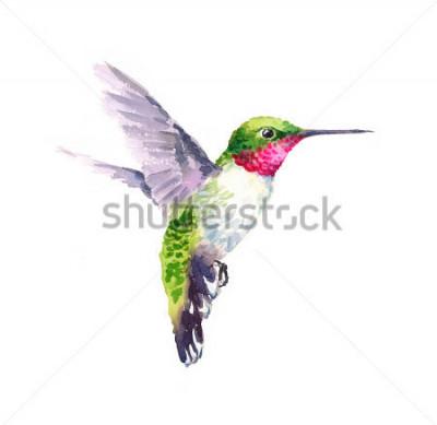 Bild Aquarell-Vogel-Kolibri-Fliegen-Hand gezeichnete Sommer-Garten-Illustration lokalisiert auf weißem Hintergrund