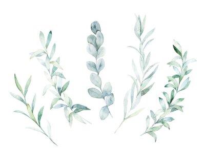 Bild Aquarellblumensatz. Hand gezeichnete lokalisierte Illustration. Botanischer Kunsthintergrund