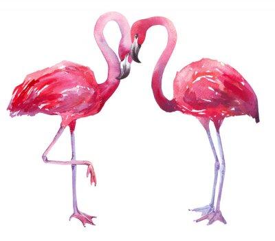 Bild Aquarellillustration eines Flamingo