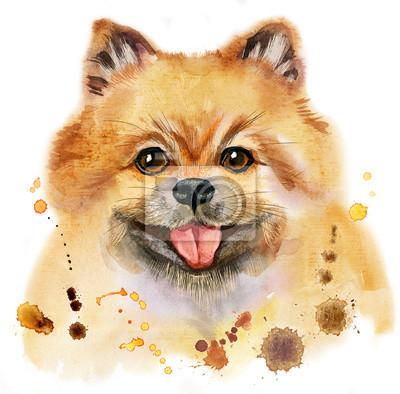 Bild Aquarellporträt des Hundes pomeranian Spitz