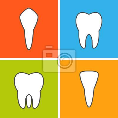 Bild Arten von Zahn.