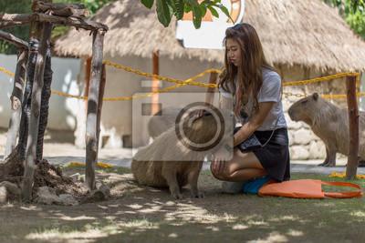 Asiatische Mädchen berühren mit einem Capybara