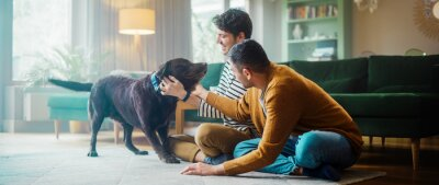 Bild At Stylish Home Apartment: Happy Gay Couple Play with Their Dog, Gorgeous Brown Labrador Retriever. Boyfriends Tease, Pet and Scratch Super Happy Doggy, Have Fun in the Living Room Flat.