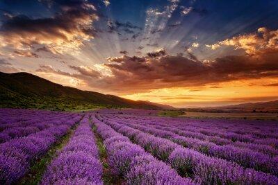 Bild Atemberaubende Landschaft mit Lavendelfeld bei Sonnenaufgang