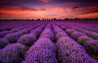 Bild Atemberaubende Landschaft mit Lavendelfeld bei Sonnenuntergang