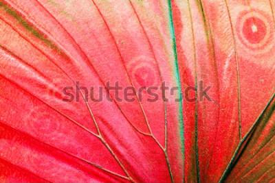 Bild Ausführliches Makrofoto eines roten tropischen Schmetterlingsflügels