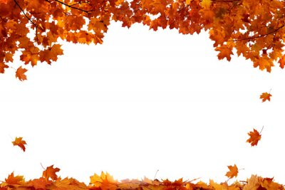 Bild Autumn colored falling maple leaves isolated on white background