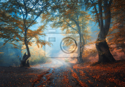 Autumn forest with dirty road in fog. Colorful landscape with beautiful enchanted trees with orange and red leaves on the branches and trail. Scenery with path in mystical foggy forest. Fall colors