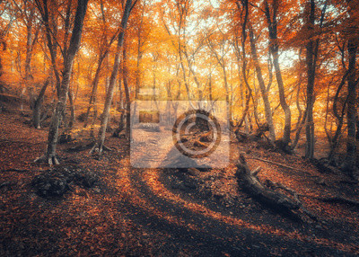 Autumn forest with trail in fog. Colorful landscape with beautiful enchanted trees with orange and red leaves on the branches. Amazing scene with path in mystical foggy forest. Fall colors. Nature